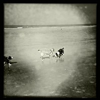 Wetdogs
